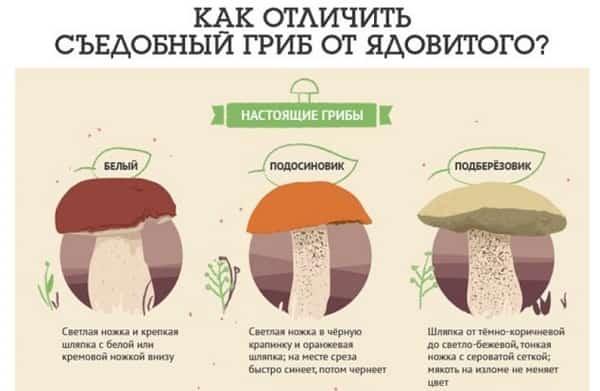 как отличить белые грибы от ложных белых видео