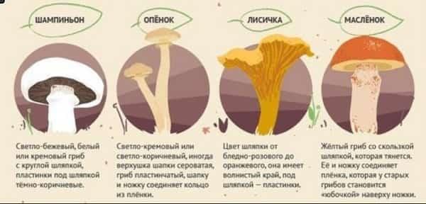 Где собирать грибы в Подмосковье в 2017 году
