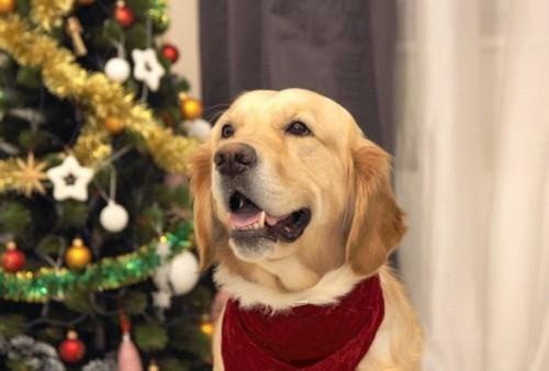 Как правильно встретить Новый год собаки 2018 по знакам зодиака