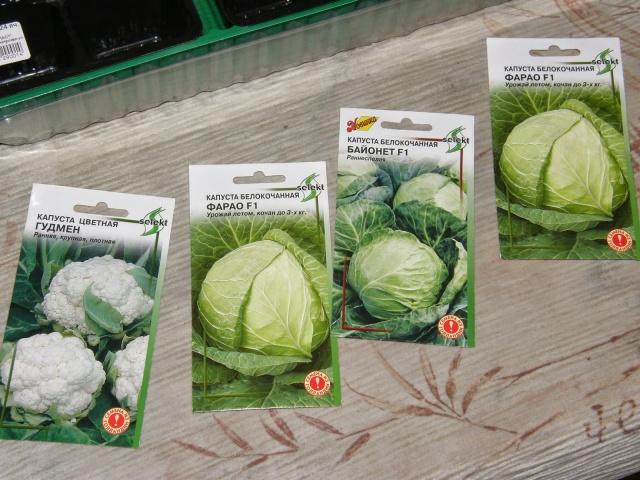 Срок выращивания капусты 71
