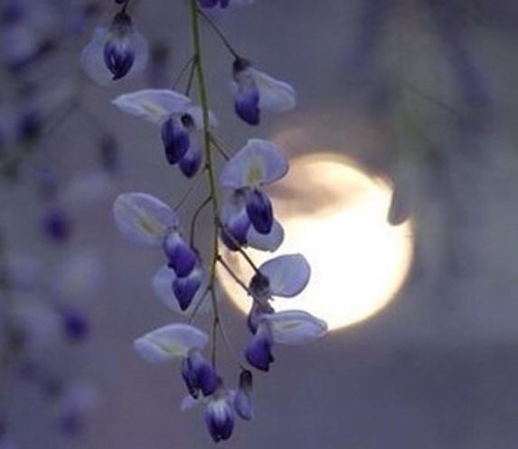 Какая сейчас луна 18 ноября 2017 года: растущая или убывающая