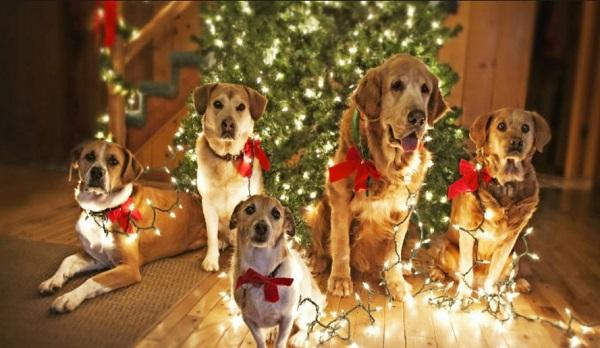 Новый год желтой собаки