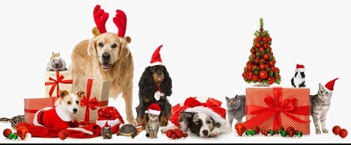 Приметы год желтой собаки