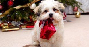 Что поставить на стол в год Собаки