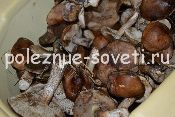 Маринованные белые грибы на зиму простой рецепт