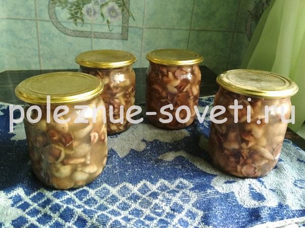 Маринованные маслята на зиму - самый вкусный рецепт