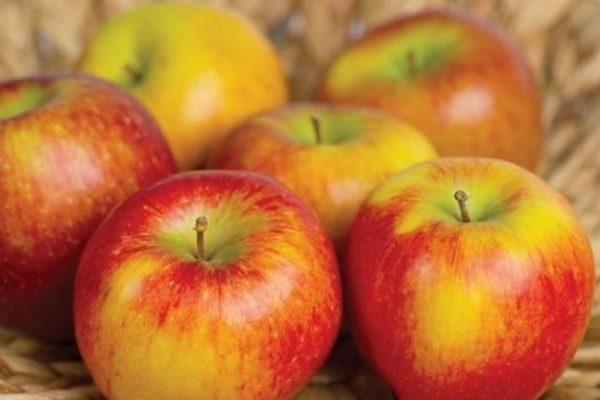 Яблочный спас 2018: какого числа, традиции