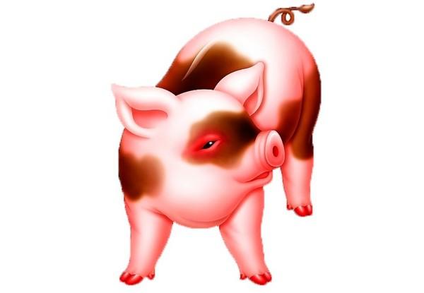 Символ 2019 года Желтой Свиньи по Восточному календарю картинки